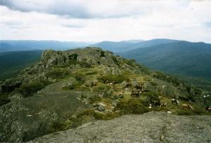 History -Horses on Mt Morgan